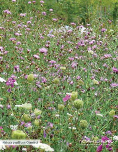 Natura papillons Nova-Flore
